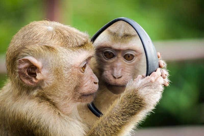 top-monkey