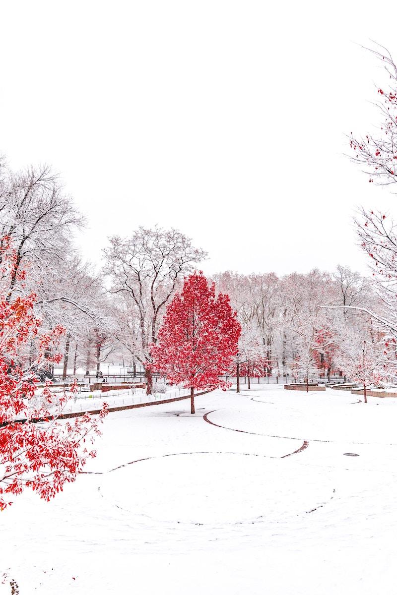 winter-lawn-art