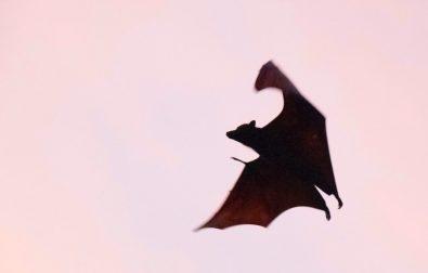 bat-skit