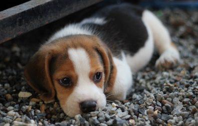 puppy-dog-surprise