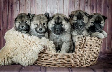 doggy-doo-and-kitty-doo