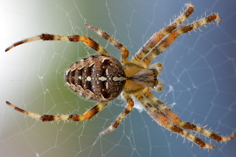 the-spiders-victim