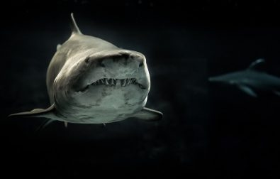 stay-outta-the-sharks-house